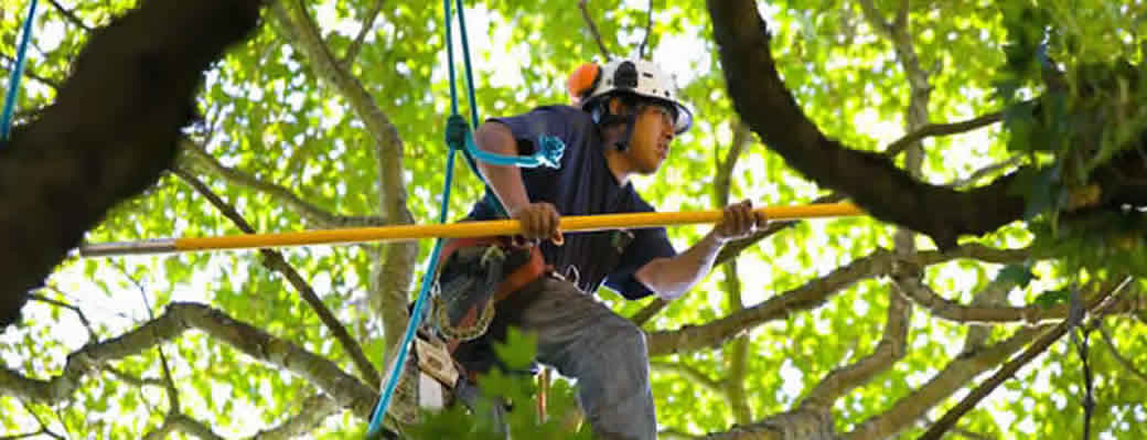 Tree Service in Palm Beach County, FL – Tree Trimming, Tree