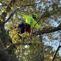 Oak tree experts of South Florida