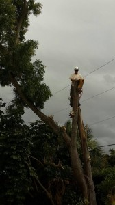 Tree Services Palm Beach County