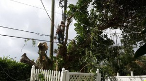 Palm Beach County Tree Services