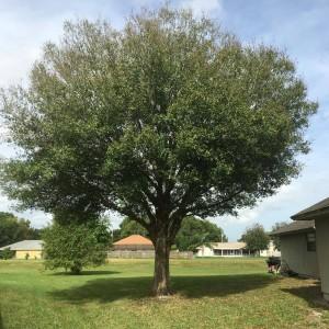 Palm Beach County Tree Removal