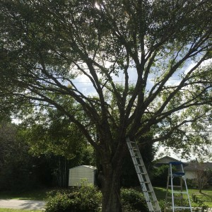 Tree Removal Palm Beach County