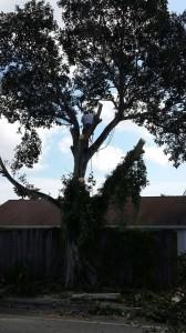 Tree Removal Palm Beach Gardens