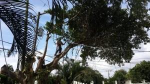 Palm Beach Garden Tree Removal