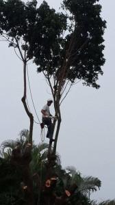 Tree Service Palm Beach