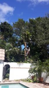 Tree Services Palm Beach Garden