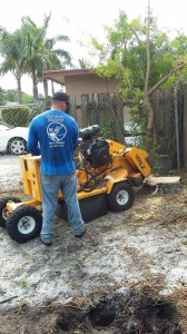 Stump Grinding in Lake Park