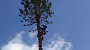 Tree Removal in Wellington, FL
