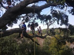 recreational climbing in Northern Florida