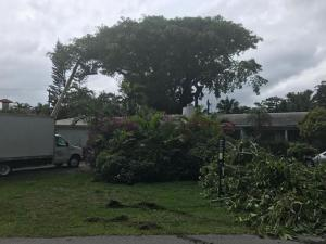 wellington, fl banyan removal